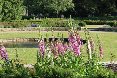 Blumen im Rosengarten