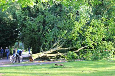 Umgefallener Baum in der Nähe des Rosengartens